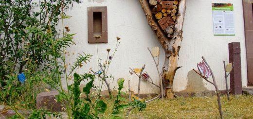 Wildblumenbeet